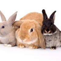 Rabbit Awareness Week - Free Rabbit Health Checks