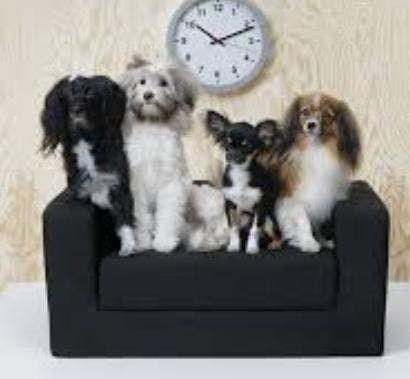 IKEA Charlotte Pet Adoption Event