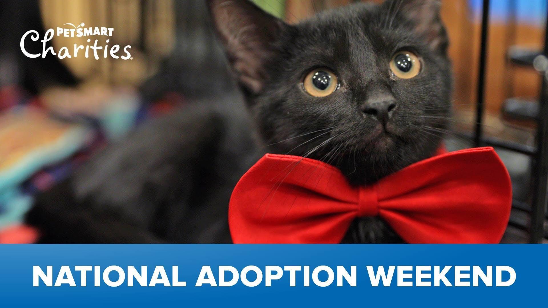 National Adoption Weekend