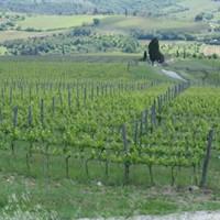 Villa Calcinaia Wine Tasting