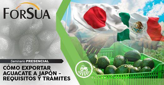 Cmo Exportar Aguacate a Japn
