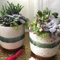 Galentines Day Succulent Workshop - No Boys Allowed