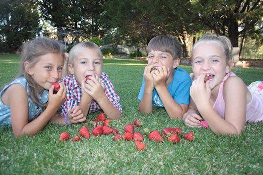 Eastern Colour Strawberries Fresh to Moorooka