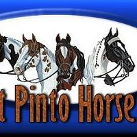 Mothers Day Silver Buckle Pinto &amp Open Show