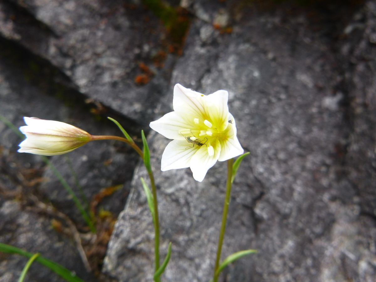 Nature of Snowdonia Arctic-Alpine Special - Environmental Workshop