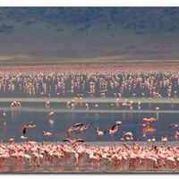 An Expedition to Lake Magadi and Olorgesaillie Prehistoric Site