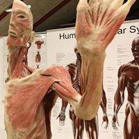 Real Human Bodies