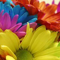Colour in Flower Arrangements