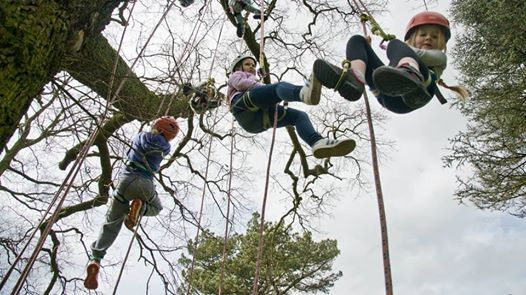 SOLD OUT - The Big Tree Climb