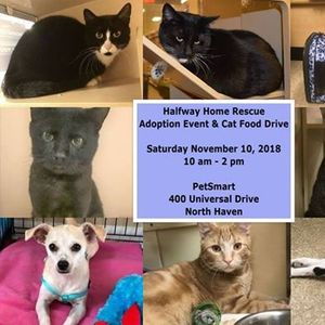 SPCA for Pet Adoption events in the City  Top Upcoming