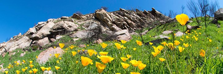 Free Guided Nature Hike