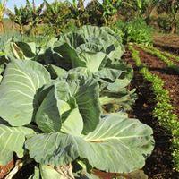 Curso de Agricultura Orgnica Aplicada