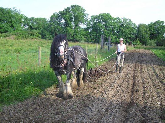 Introduction to working with horses