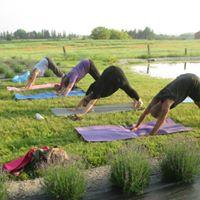 Lavender Yoga
