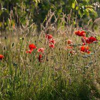 Garden Masterclass - On the Edge of Wild