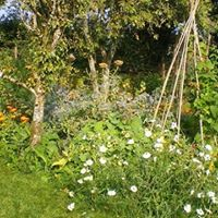 How to Plant a Forest Garden