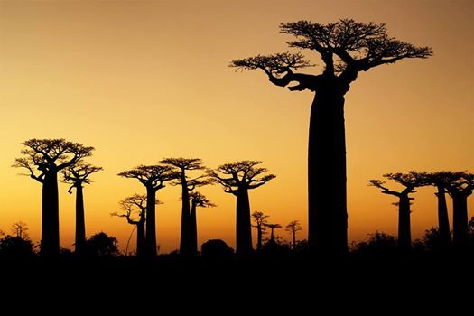WORLD INSIGHT Lnderabend Madagaskar