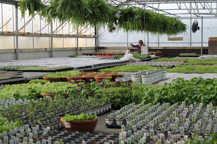 little sprouts behind the scenes tour - Wilsons Garden Center