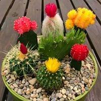Terrarium or Miniature Garden Workshop