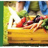 Taller de Huerta Orgnica. Alimentos frescos y saludables