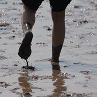 Mudflat Hiking 2018  Batch 2