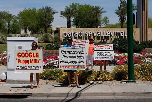 Puppy Mill Pet Store Protest - Phoenix at Paradise Valley