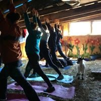 Goat yoga Instructed by Julie ONeill