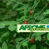 SOLVE-it for Earth Day caring for native plants. AFSCMEgreen