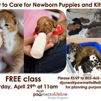 How to Care for Newborn Puppies &amp Kittens