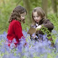Bluebell Family Crafts and Walk
