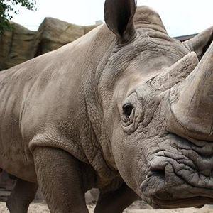Zoo Brew - August 15 - Rowdy for Rhinos