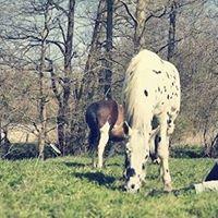 Horse Contact - Styrke Sknhed og Hjerte