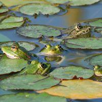 Gli abitanti dello stagno at punto info acquedotti via lemonia for Gli animali dello stagno