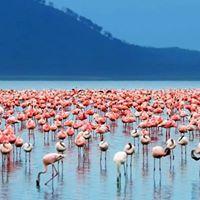 Menengai Crater &amp Lake Nakuru National Park Day Trip
