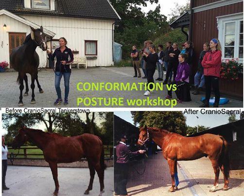Conformation vs Posture workshop with Maureen Rogers