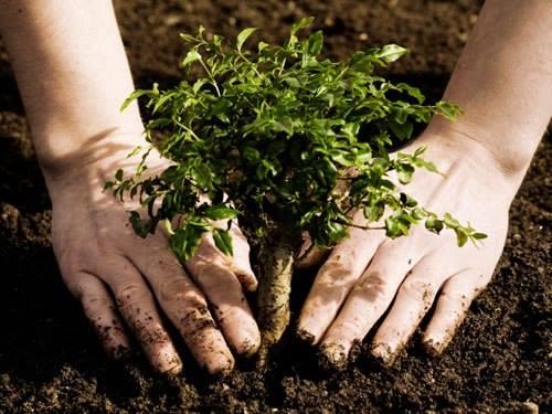 Plantio Coletivo na Unipaz