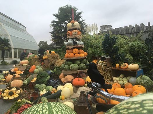 Harvest Display Construction