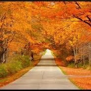 Paint The Fall Colours