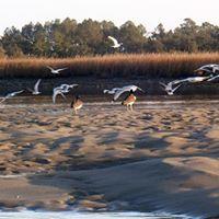 Murrells Inlet Salt Marsh Paddle