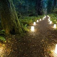 PLEASE NOTE DDATE MOVED DATE MOVED TO JANUARY 21 Woodland Luminary Walk