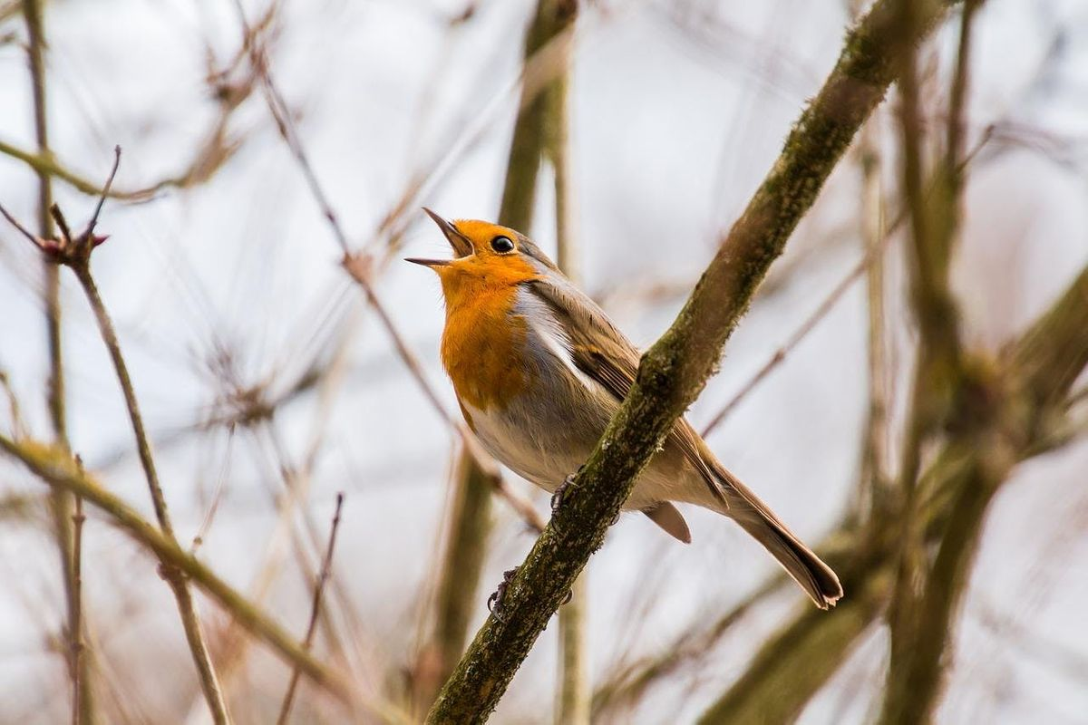Dawn Chorus with Mike Dilger