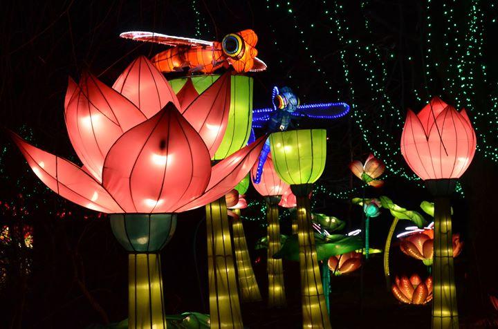 Chinese Lantern Festival North Carolina At Daniel Stowe Botanical Garden Belmont