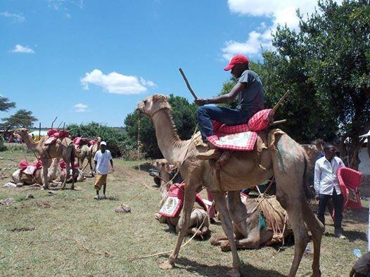 Mararal Camel Derby 2018 Edition