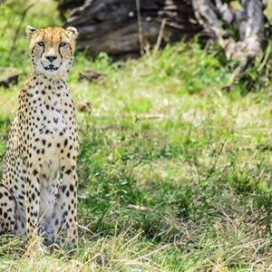 Twende Maasai Mara 9800 Offer