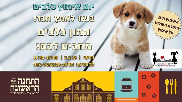 מרענן Puppy Station - אימוץ כלבים בירושלים at התחנה הראשונה ירושלים CQ-89