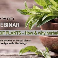 Webinar The power of plants - How &amp why herbal treatments work