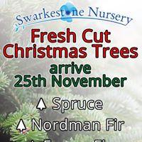 Fresh Cut Christmas Trees Arrive