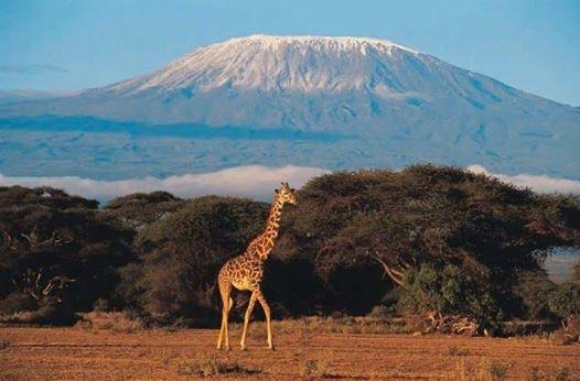 Rongai route Kilimanjaro trekking adventures tour