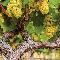 National Chardonnay Day Dinner with Wente Winery