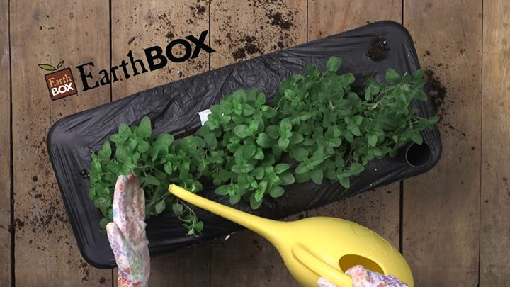 Herbs on the Deck with Earthbox® | davidsonville
